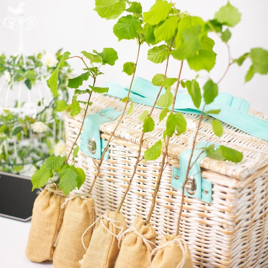 Plant saplings as wedding favors