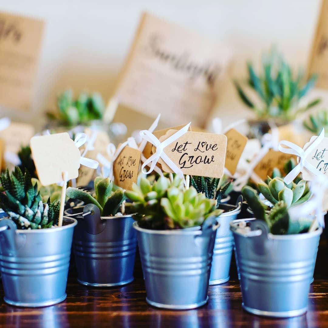 succulents as wedding favors